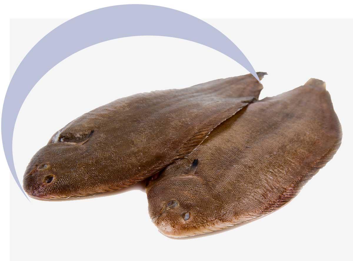 Flounders | MarAbisal